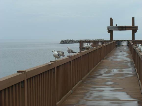 夕凪の橋の鳥